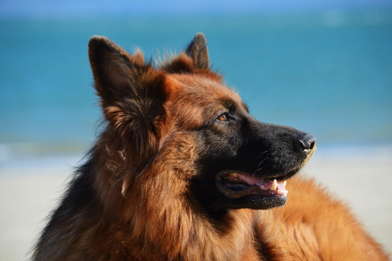 Allmänt om hundar