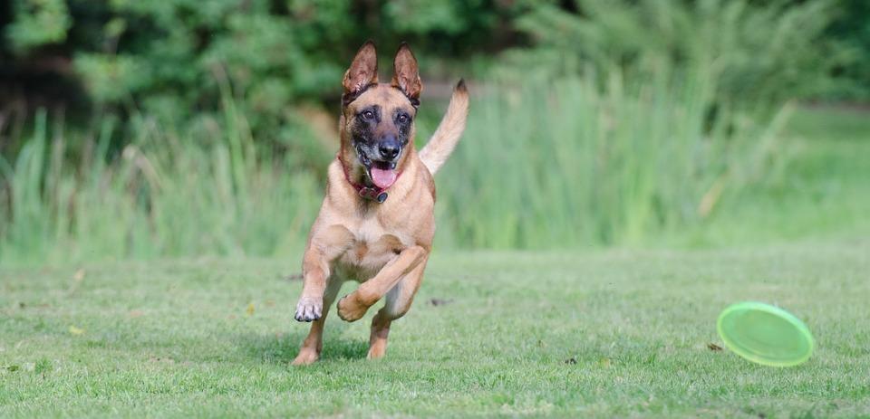 Hundsport